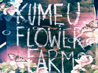Kumeu Flower Farm